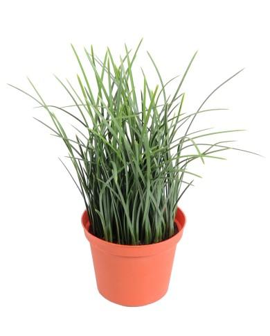 Künstliches Gras (PE), ca. 23cm