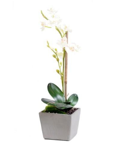 Premium (3d) Phalenopsis weiss, ca. 37cm