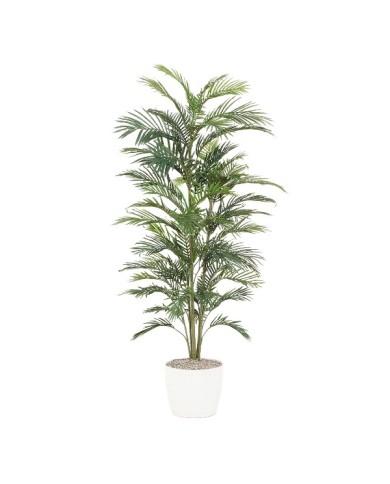 Areca-Palme x3, 28 Blätter