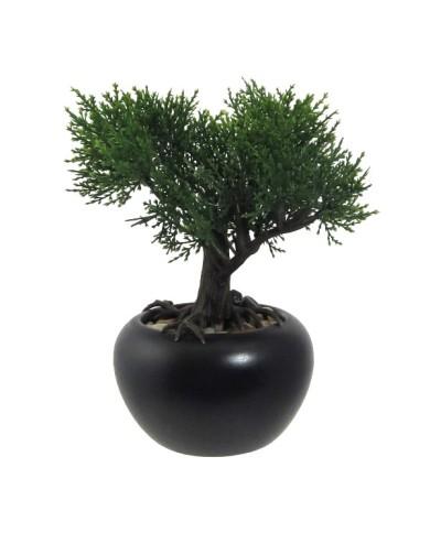 """Bonsai """"Zeder"""" ,ca 19cm"""