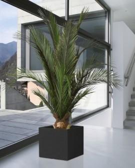Konservierte Pflanzen