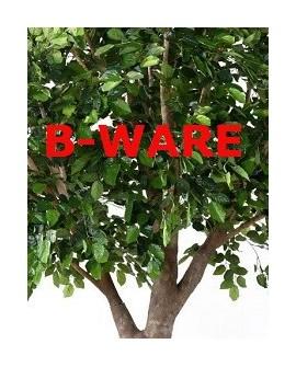 B-Ware & Abverkauf