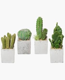 Künstliche Kleinpflanzen + Exoten