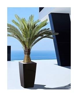 Palmen Outdoor